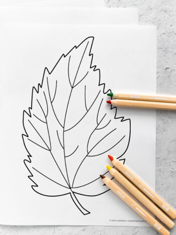 Print off these FREE printable simple autumn leaves coloring pages for a fall rainy day or a simple activity with your kids! #printables #coloringpages #olgainthekitchen #fallactivity #fallcoloring #thanksgiving #crafts #diy